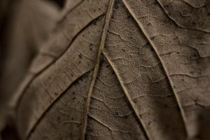 leaf III by sspiderr