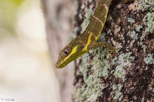 Young knight anole profile by LordMajestros