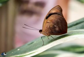 Butterfly Moments...loner by imonline
