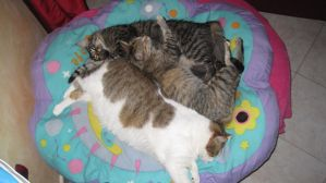 three cats and one bed by Briel74