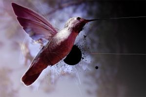 Hummingbird. by milktoday