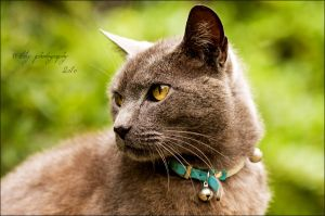 Just Looking by ILTBY