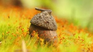 Your Tiny Acorn Home By Rick Tinyworlds-d7n5kaq by Rick-TinyWorlds