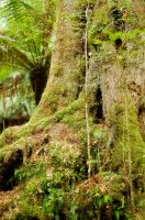 Mossy Bower 4 by rensstocknstuff