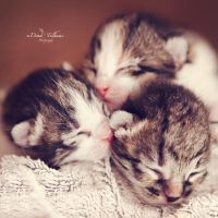 Newborn kittens by Dina90T