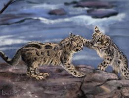 Snow Leopard Cubs - Study by Leia1987