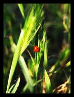 Ladybug After the Storm by krissy