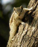 very very surprised squirrel by kumarvijay1708