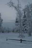 Snowy trees 2 by Arctic-Stock