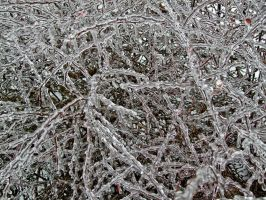 Icy Branches II by Baq-Stock