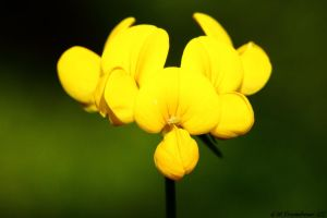 Yellow Pillows by natureguy