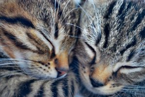 The Closeness of Kittens by Deus-est-femina