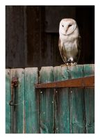Barn Owl by Neutron2K