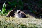 The Weathers Getting 'Otter by DrHamster
