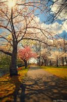 On A Spring Afternoon II by MyLifeThroughTheLens