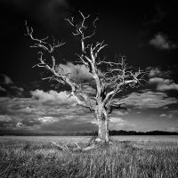hopeless tree 2 by marcopolo17