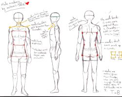 Male Anatomy Notes by Artemis-Solie