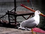 le seagull by miguelazevedo