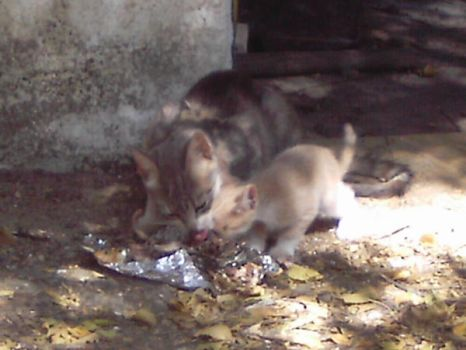 Mother and kid having lunch by Ferkvin