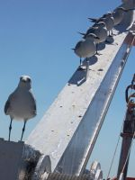 More Gulls by jeffreyianxlt77