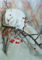 Squirrel - albino by danuta50