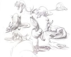 Kangaroo studies by davidsdoodles