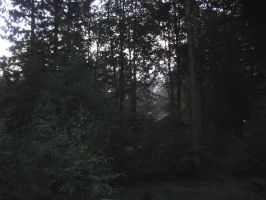 5am In Forest on Holiday by hexelfglitter