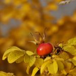 colours of autumn XV by Wilithin