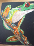 Frog on a branch by AlliCali
