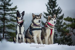 Our dogs are friggin cute! by hannord