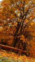 Autumn Bench by EAstronaut