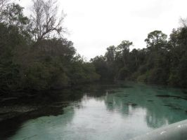 038 Weeki Wachee Springs by crazygardener