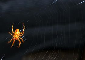 AH CRAP ITS A SPIDER! by JCoinster