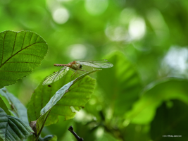 Small green world by Mogrianne