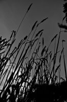 Long Grass by TheIronyOfItAll