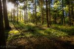 woodland sunshine by johnleewheatley