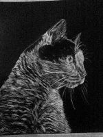 Ily_Temp_Scratchboard by alyssvisuals