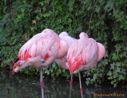 Loving Flamingos by Xiuhcoalt