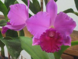 151  orchid show by crazygardener