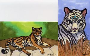 Tigers ACEO by firedanceryote