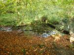 water and leaves by photodash
