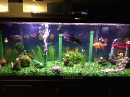 Mario fish tank (6) by bookchick6