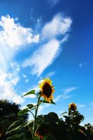 Sunflowers by Joe-Lynn-Design