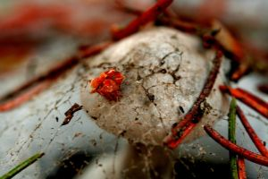 Webbed Fungus by greenwalled1