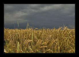 wheat field before a thunderst by Hartmut-Lerch