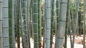 Bamboo by chibiLchan