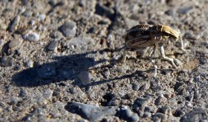 Mystery bug by PietschPhotography