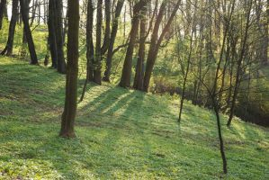 Forest Stock Image 2 by kalinaicons-stock