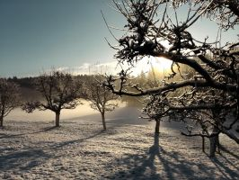 Snowy Apple Trees by VBmonkey26