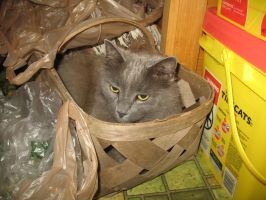 Cat in a Basket by LuckisGONE